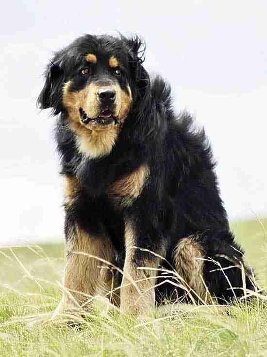 Как кочевники выбирали и называли собак и какие приметы, обряды и наговоры с ними связаны