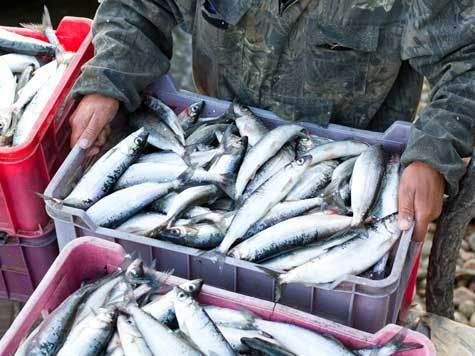 любительская рыбалка в бурятии