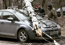 Жертвы урагана в Москве: на пенсионерку упала